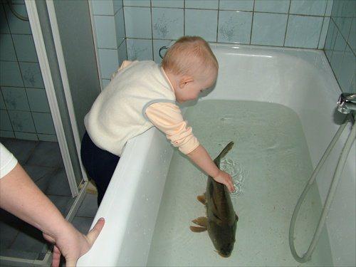 A carp in a czech bathtub