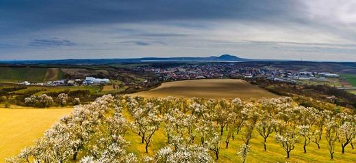 Almond gardens, Hustopeče